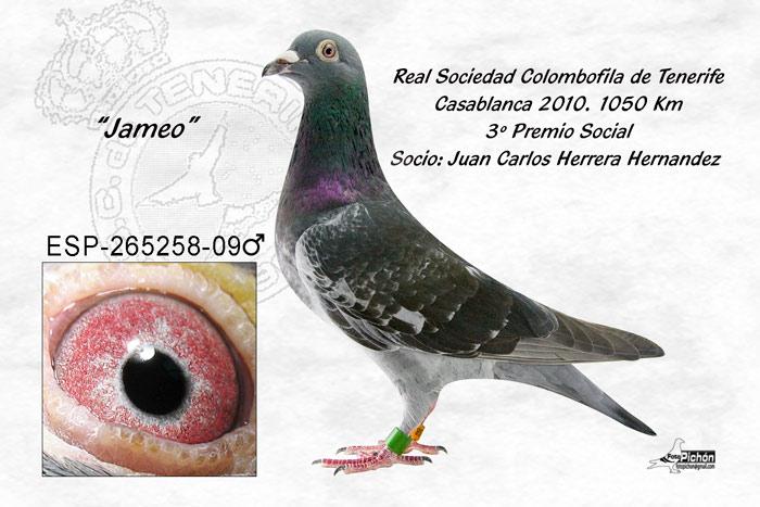 Juan carlos 1 - 5 1